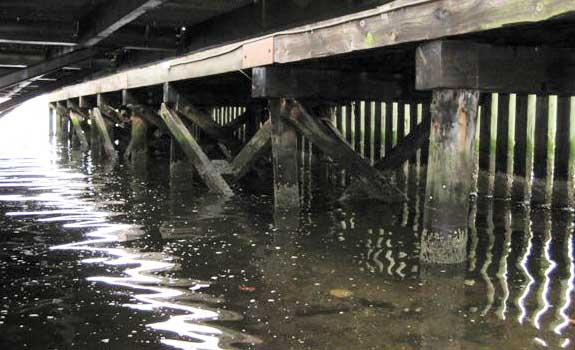 Halifax Harbor – Marine Jetty Timber Pile Protection