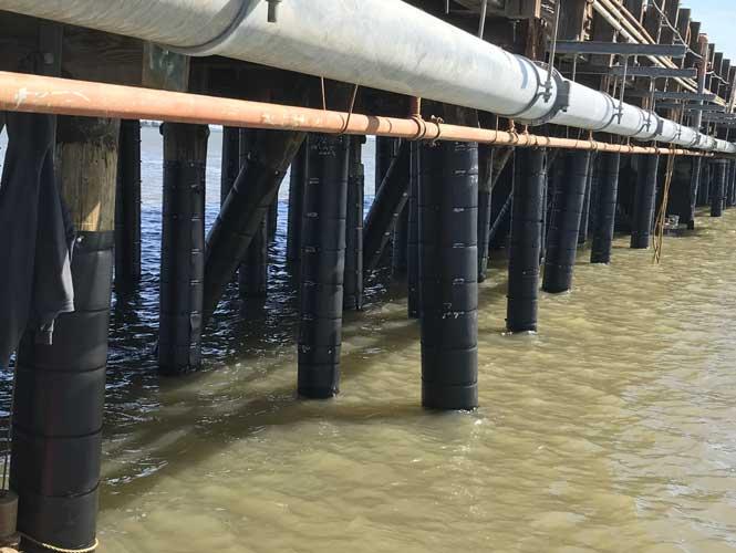 marine borer protection system